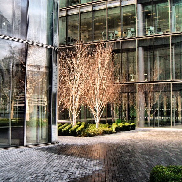 Trees at More London #trees #light #architecture #modern #stone #building #london #londonarhitecture #morelondon #silver #wet #cityscape #metropolitan (Taken with Instagram)