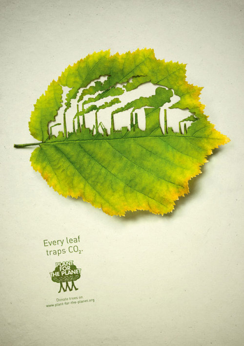 jaymug:  Every leaf traps CO2 - Plant for the planet