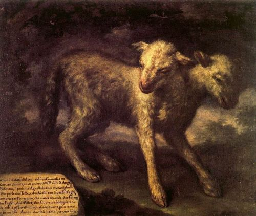 cocoroachchanel:  Two-Headed Lamb, Bartolomeo Bimbi,1721  Woooooah. Darkest Lamb.