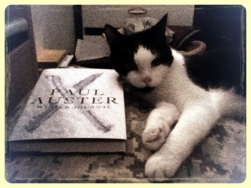 My cat, Whiskers, enjoying Paul Auster's new memoir.