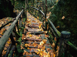 trees fall forest autumn leaves path trail