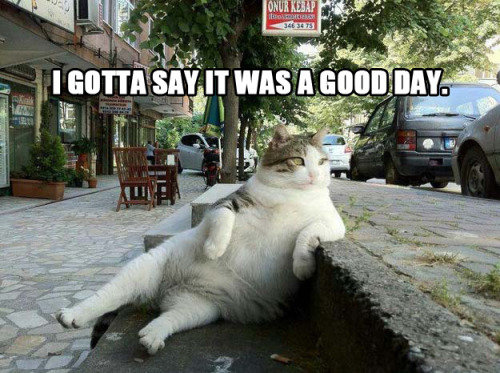 Ice Cube's It Was A Good Day As Told By Cats