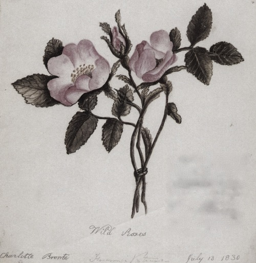 funeral-wreaths:  Watercolour sketch of wild roses by Charlotte Brontë, dated July 13th 1830