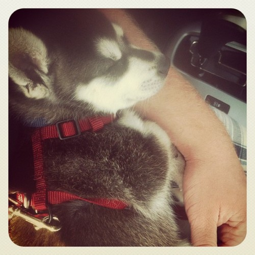michael-says:  Misha taking a nap on my arm. cutie. (Taken with Instagram)
