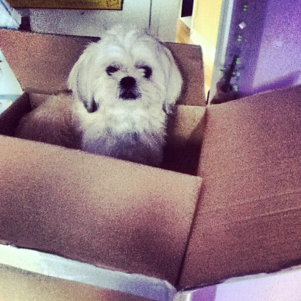Someone wants to go to university with me. :) #cute #puppy (Taken with Instagram)