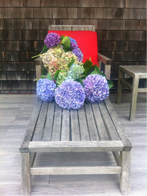 Simple pleasures. Cutting hydrangeas in Nantucket.
