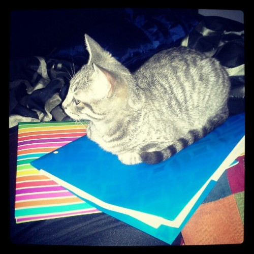 She likes my homework more than I do! (Taken with Instagram)