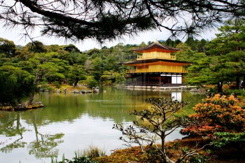 Kinkaji or Golden Pavilion, Kyoto April 2012 by =s-girl