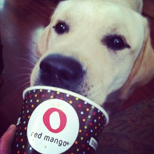 Puppies love Red Mango!