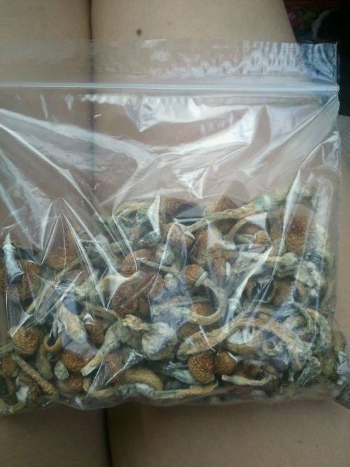 puttanella:   puttanella: $190 worth of shrooms.  wow I miss this