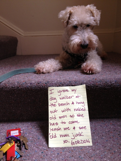 dogshaming:  Submitted Anonymously but was so good it needed to be posted immediately.  This guy is the greatest supervillain of our generation.
