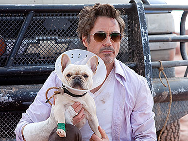 Robert Downey Jr. with a French bulldog from his film Due Date.