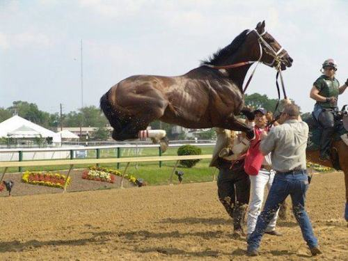 equestrian-athlete:  Horse, what are you doing!?