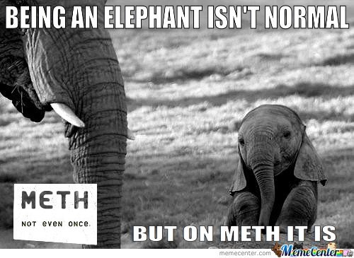 Being an Elephant isn't normal…