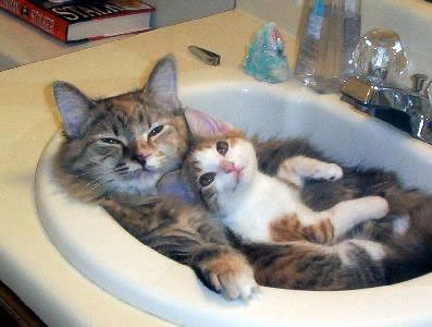 [Image: A gray striped cat laying on it's back in a bathroom sink with a white and brown striped cat cuddled up with it.]