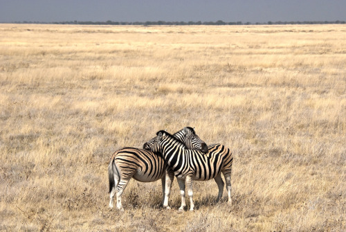 yuriorbital:  Wish you were here..Etosha National Park, Namibia, 08-2012to SchifoCopyright © Yuri Segalerba, All Rights Reserved