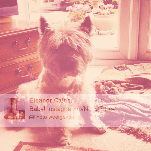 Eleanor's Dog Pepper