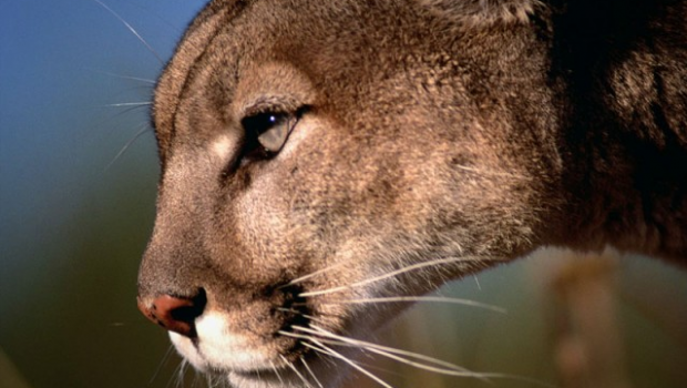 Read the changes: Apple releases OS X Mountain Lion 10.8.1