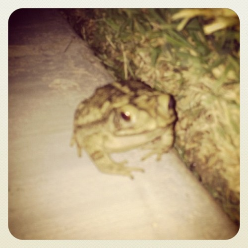 Saw my toad friend the other night. (Taken with Instagram at The Arcade II)