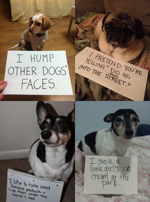 "New Blog!!! ""Dog Shaming"" See the best of this new Tumblr dedicated to bad dogs who deserve to be punished severely because…oh, we just can't stay mad at you."