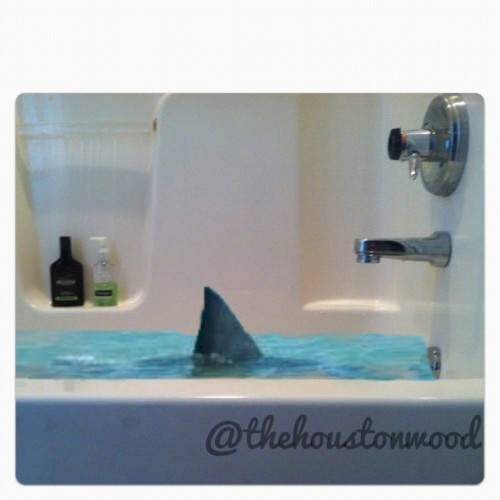 AHHHHHH! THERE'S A SHARK IN MY BATHTUB! #shark#sharkweek#bathtub#water#hollister#hco#acne#shoutout#blue#s4s#swim#followback#follow#juxtaposer#cute#fin#sharkfin#animal#crazy#weird#like (Taken with Instagram)