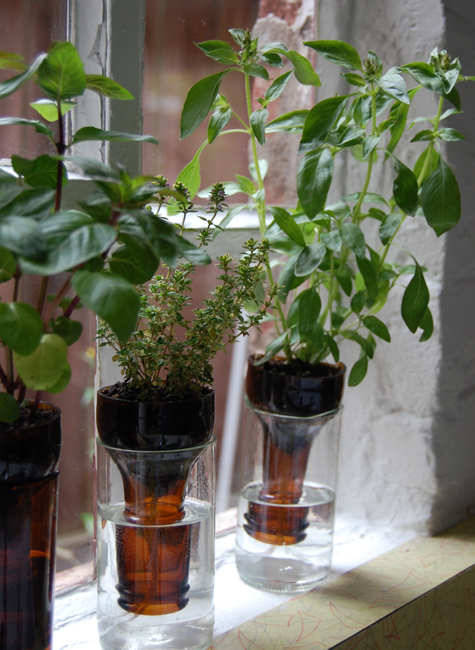 greenbeancrafts:  upcycle.. use an old bottle to make your own hydroponic garden!!