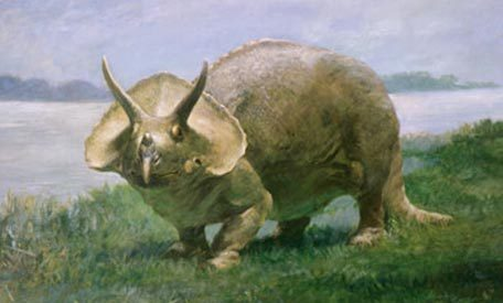Charles R. Knight's (1874-1953) Triceratops at the Smithsonian's Museum of Natural History.