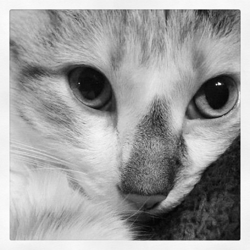 Callie kitty 🐱 (Taken with Instagram)