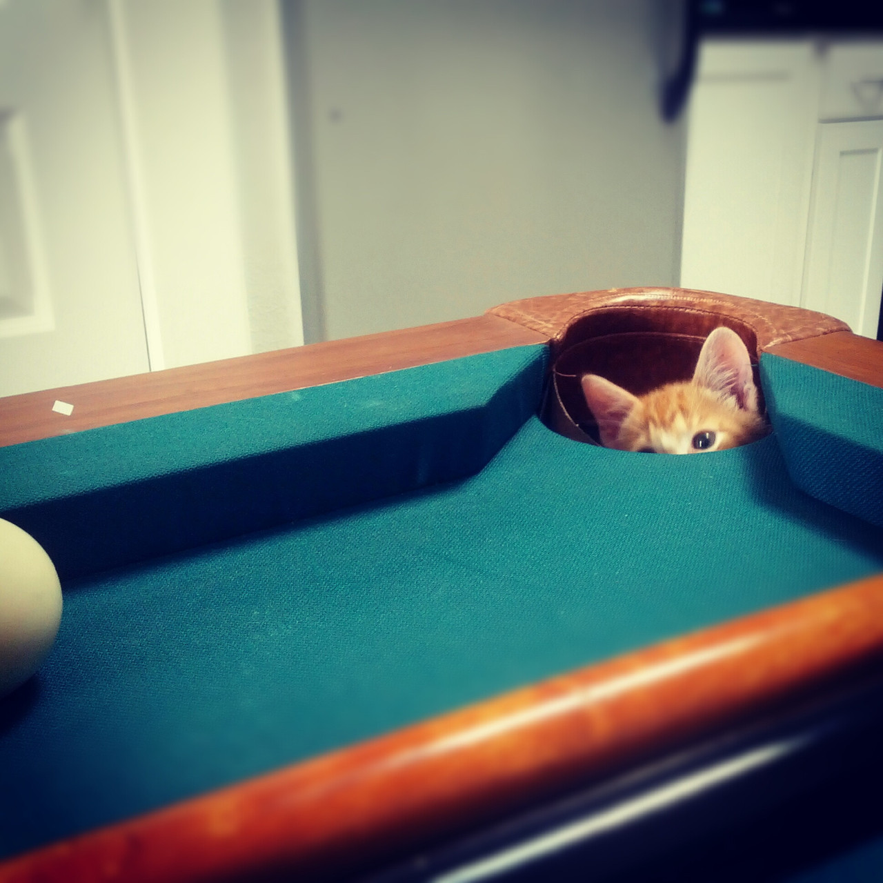 Camper Kitten is in a very strategic position. Photo via Imgur