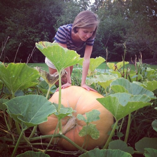 luce snapped this pic of kirb inspecting the biggest of our backyard pumpkins! quite to bumper corp this year