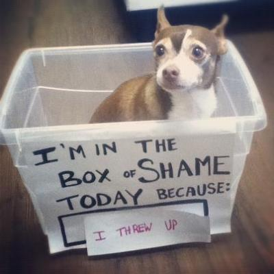 dogshaming:  He's done something bad often enough to need a box of shame.