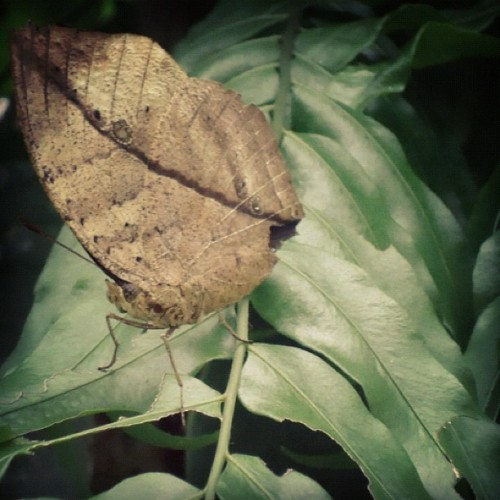 This butterfly is stunning. (Taken with Instagram)