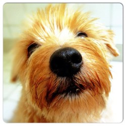 From @seven_of_9 #ig #terrier #face  (Taken with Instagram)