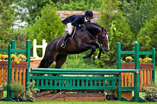 2011 Evergreen Classic - Grand Hunter Derby by DWHonan on Flickr.