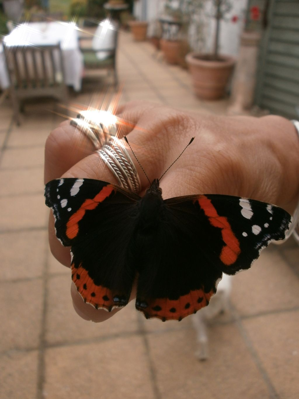my butterfly friend