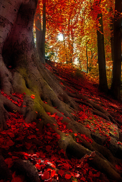 bluepueblo:  Crimson Forest, Bavarian Alps, Germany photo via autumn