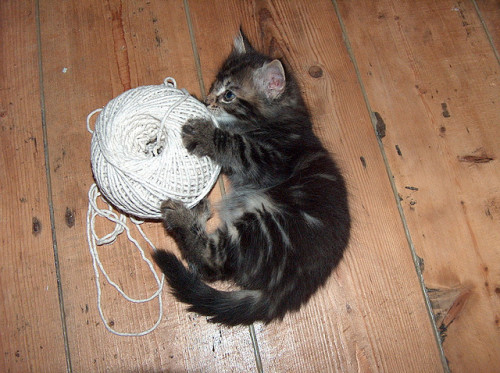 "Kitten Cited for Cliché String Playing After the county passed a ""no clichés"" ordinance last Spring, many local policy analysts called the measure ""unnecessary"" and ""a waste of time.""  The general consensus was that so-called ""public displays of cliché behavior"" were too few and far in between for a law on the books. Now a local kitten has been cited for the first violation of the county ordinance.  Oscar the kitty was reportedly caught in public playing with string in a manner that police called ""extremely expected.""   Oscar's lack of creativity will likely cost him the maximum $130 fine allowed under the ordinance. Via toby-won-kenobi."