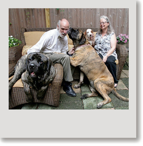 Loved this story about a family and their mastiffs!