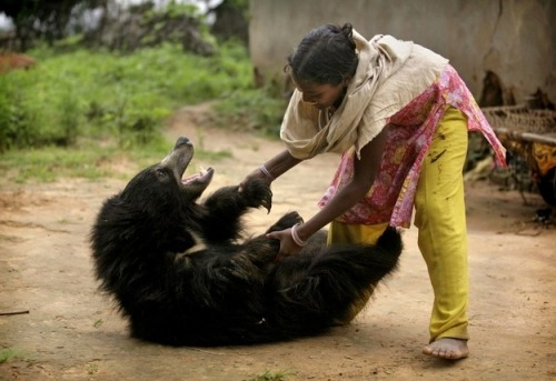 statravelus:  Smile Friday: How cute is this sloth bear playing like puppy in India?!   I WANT SIX