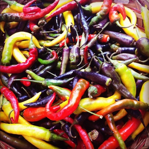 Thai peppers across the spectrum #summer (Taken with Instagram at Union Square Greenmarket)