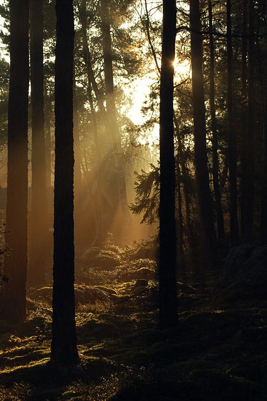 diterra:  morning rays (by Heli Lehtonen)