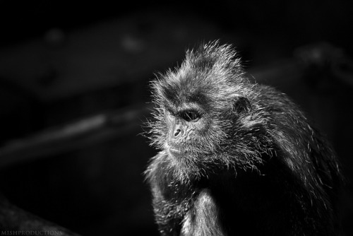 Columbus Zoo 8.16.12 on Flickr.