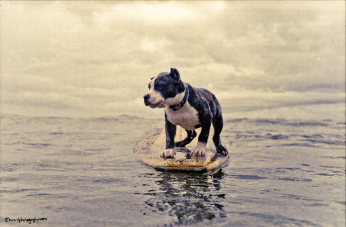 Ridiculously cute surfing puppy.(Shot on a Nikonos V, w/Kodak Portra)