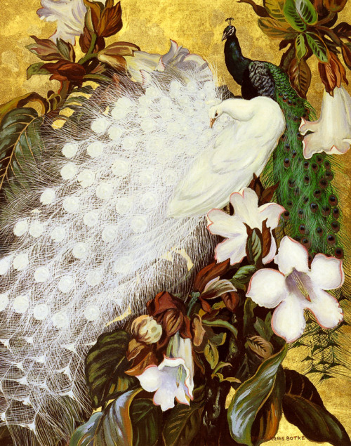 thisblueboy:  Jesse Arms Botke, 1883-1971, White and Blue Peacocks