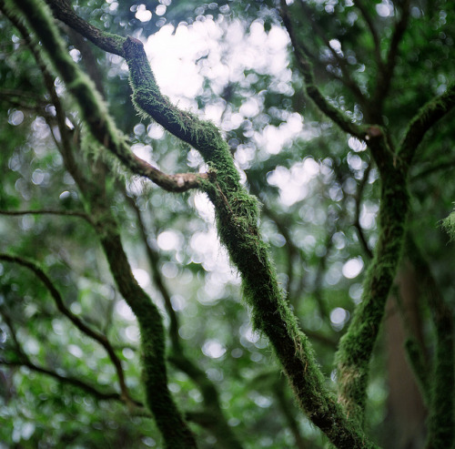 Moss by Saria Dy on Flickr.