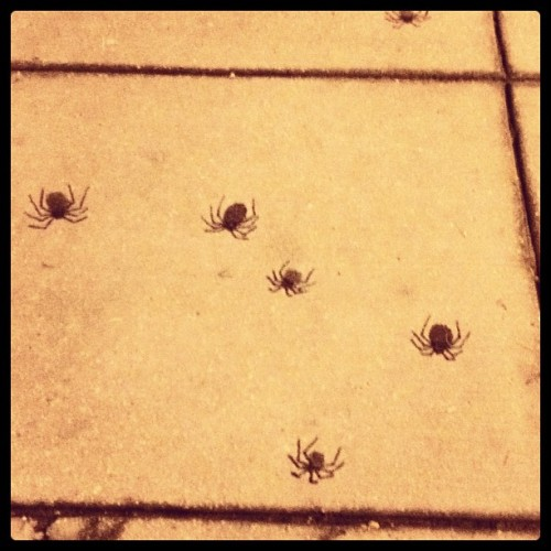 Sharpie + Sidewalk gum = SPIDER ART (Taken with Instagram)