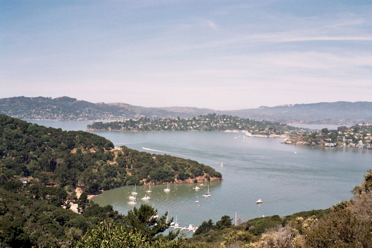 dolfapedia:  Ayala Cove, Angel Island. Sometime in June.  I want to go to there.