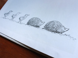 Hedgehog Parade! Talking about picture books on my blog!