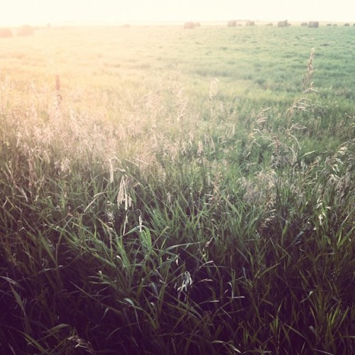 Checking crops tonight. (Taken with Instagram)