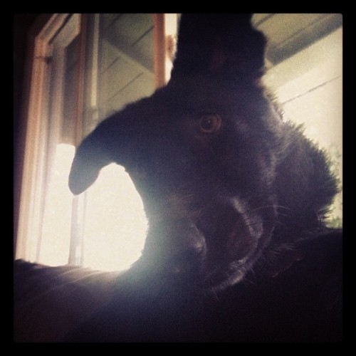 Murph sitting like a people. #murphy @ktpoy @ryanhrvy  (Taken with Instagram)